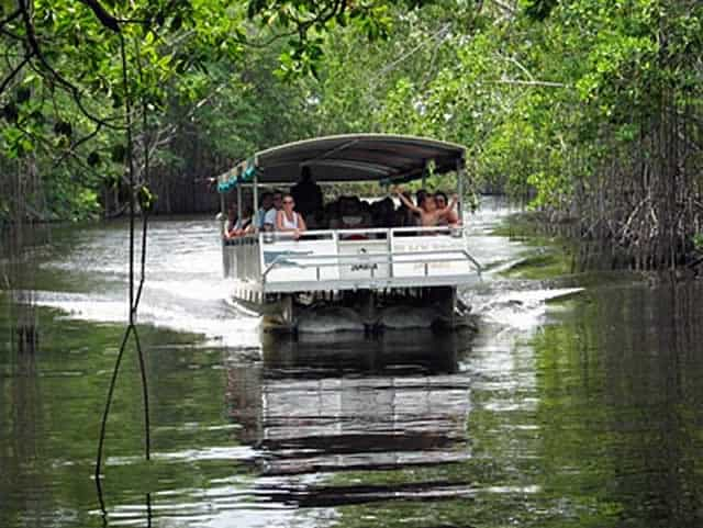 the black river safari Black river safari discover the beauty of the south coast with a boat tour by motor launch up jamaica's largest navigable river and through what is jamaica's largest.