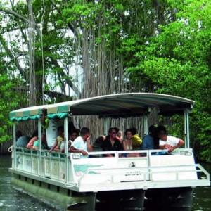 black-river-safari-eco-tour