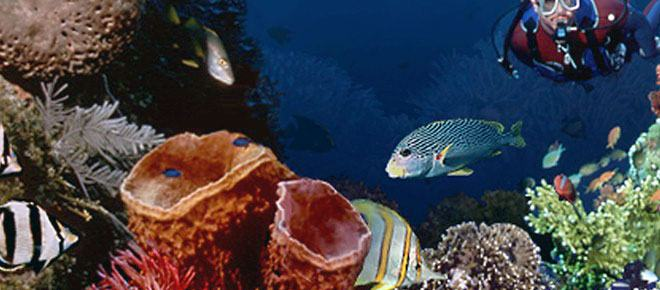 Scuba Diving In Negril, Jamaica
