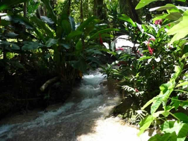 Things to do in ocho rios turtle river park jamaica for The enchanted gardens jamaica