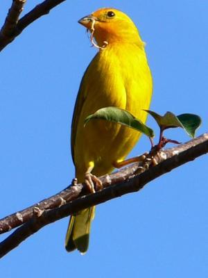 Montego Bay Cruise Ship Terminal To Rockland Bird Sanctuary