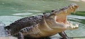 jamaica-swamp-safari-village-falmouth