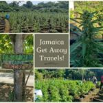 Jamaica was way ahead of the curve, since it made headlines all over the world when it decriminalizes Marijuana back in 2017. Ganja, as it is known in Jamaica, has a deep cultural significance locally as it was introduced centuries back when people from India bought it to the island.